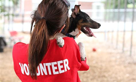 service dogs volunteer getting started 171 humane society of catawba county