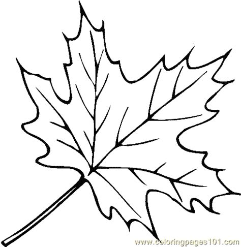 printable leaves and trees free coloring pages of maple tree