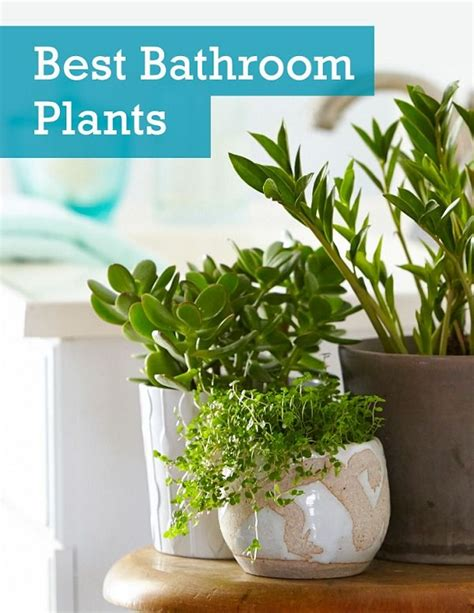 plants for a bathroom without window the 6 best plants for your bathroom gardening viral