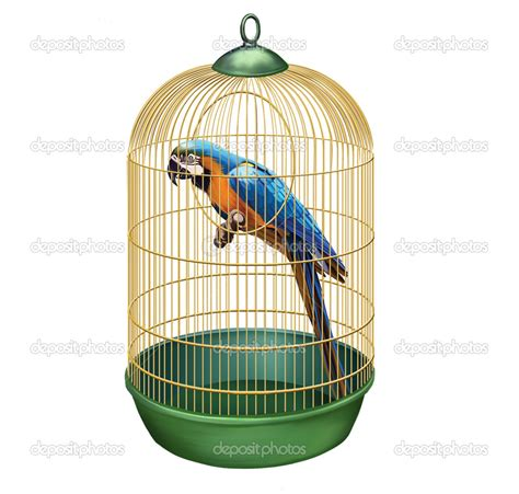 Bird In A Cage bird in cage search objects 3