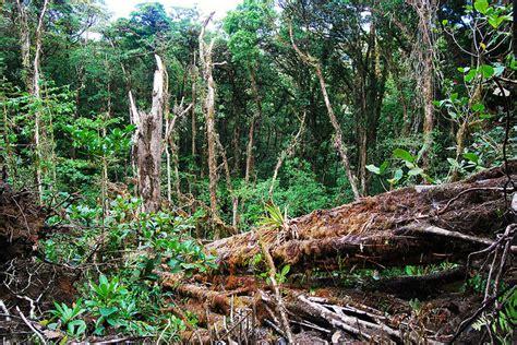 definisi istilah pengertian arti kata degradasi hutan review ebooks