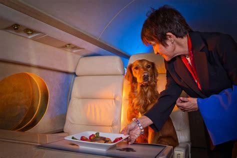 cani in aereo in cabina volare con il in cabina ora si pu 242 svago