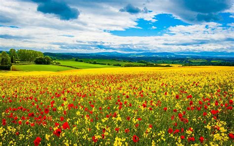 google images flower flowers wallpaper android apps on google play
