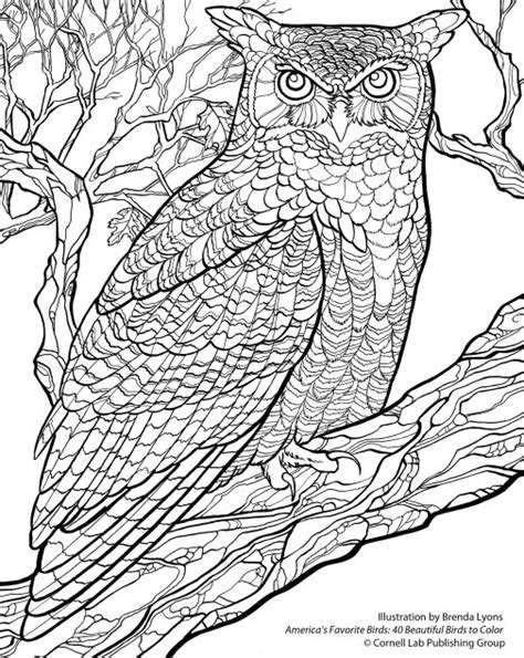 horned owl coloring page free wallpaper download from the cornell lab
