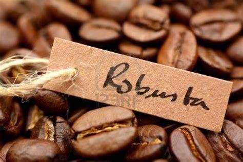 Coffee Robusta high quality robusta coffee grade 1 best price