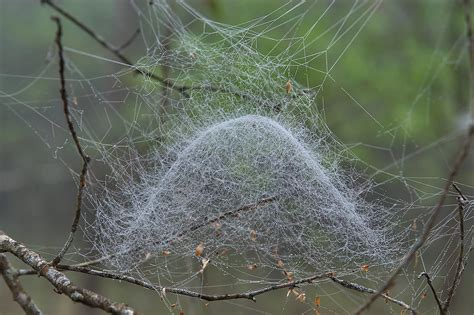 by web spider web search in pictures