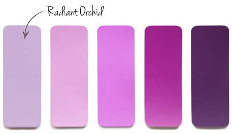 radiant orchid color the color of radiant orchid stitch fix