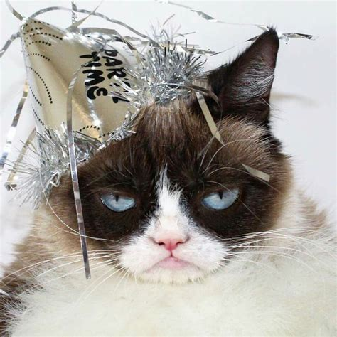 grumpy cat new year 1000 ideas about happy new year on
