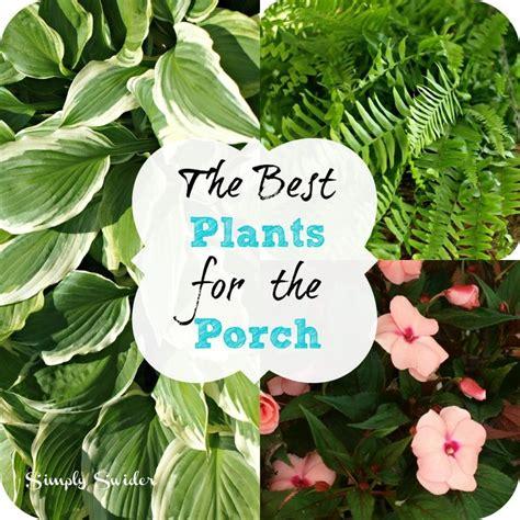 Best Planter Flowers by Best 25 Porch Plants Ideas On Front Porch