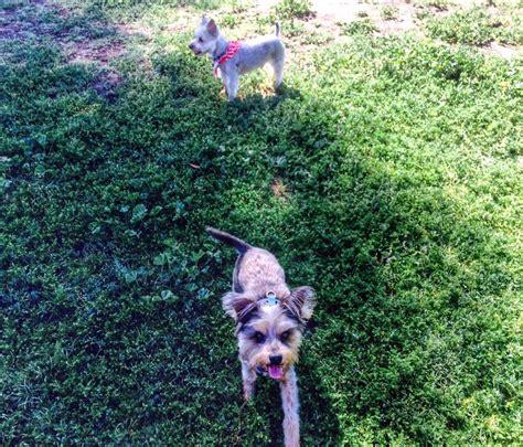 leash parks near me sepulveda basin leash park 149 photos parks sepulveda basin encino