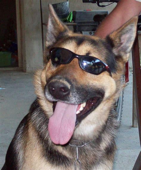 coolest dogs cool by gaara sasunaru fan on deviantart