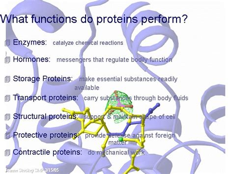 6 protein functions proteins preform many functions inside the including