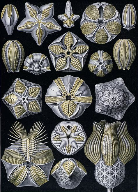 art forms from the artforms of nature painting by ernst haeckel