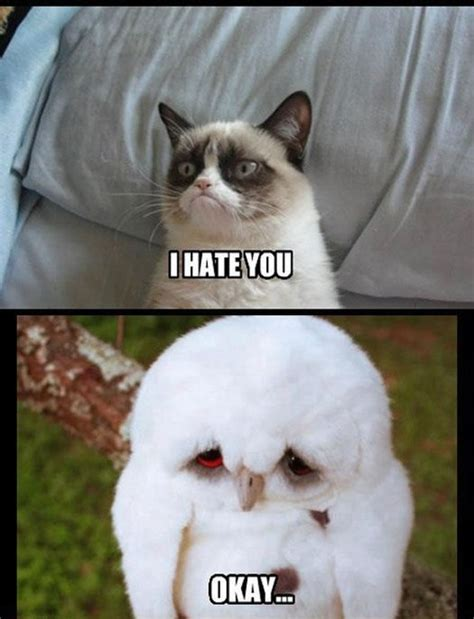 Sad Animal Memes - grumpy cat hates sad owl