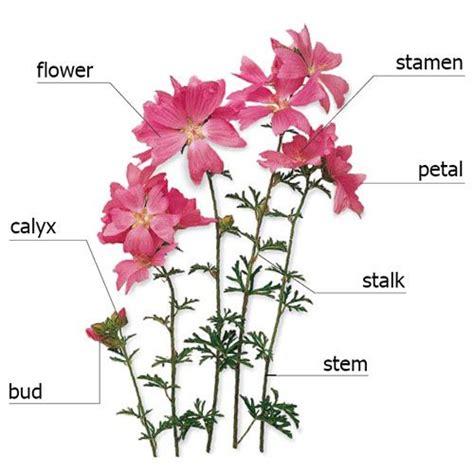 nomi di fiori in inglese fiori in inglese