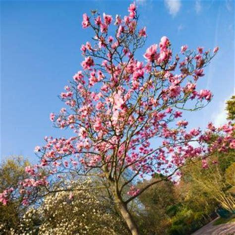 magnolia magli00br1218in the home depot
