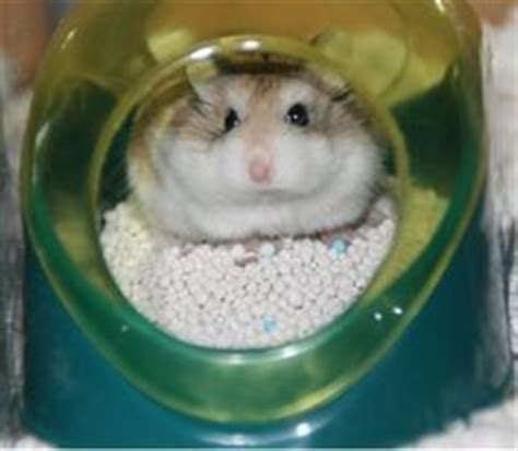 how to to potty in one spot awesome hamster cage awesome hamster cages hamster cages