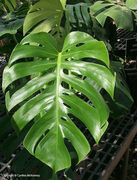 interior plants id at california state university
