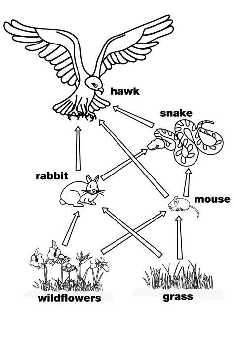 predators and prey animal habitat webquest