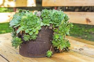 Ideas On Cactus Gardens » Ideas Home Design