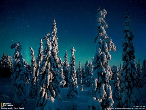christmas wallpaper national geographic national geographic christmas wallpaper wallpapersafari