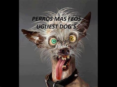 imagenes animales mas feos del mundo perros mas feos del mundo world s ugliest dogs 2016 youtube