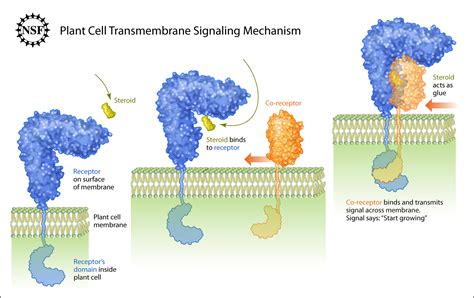 important aspects  signalling  cell membranes