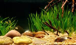 Aquascape Freshwater How To Set Up A Taiwanese Biotope Aquarium Practical