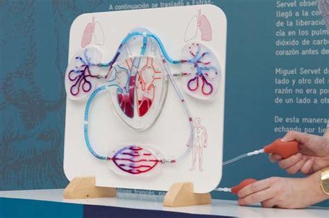 como hacer una maqueta del sistema circulatorio maqueta sistema circulatorio humano khe pinterest