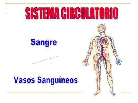 el sistema caged y sistema circulatorio vs sistema hidr 225 ulico