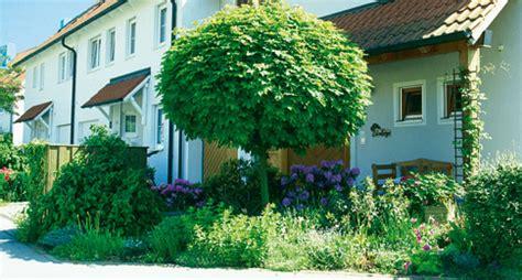Pflanze Kaufen 216 by Hausbaum Selbst De