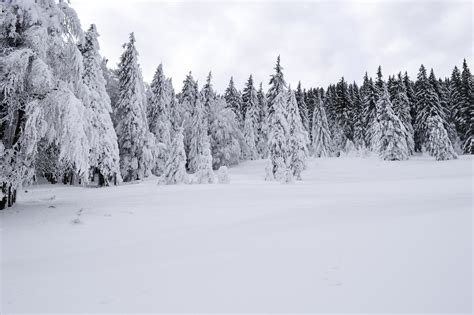 walmartcom mountain frost pine free images landscape tree nature forest outdoor mountain snow cold winter sky wood