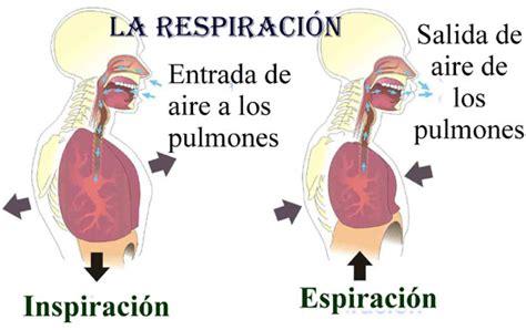 imagenes de respiracion yoga respiracion desarrollo