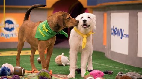 puppy bowl puppy bowl xiv the american catholic