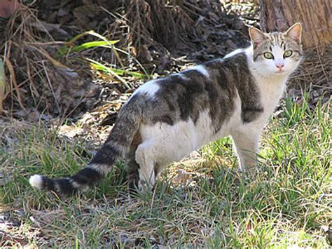 9 m 233 thodes pour 233 loigner les chats de votre jardin consobrico