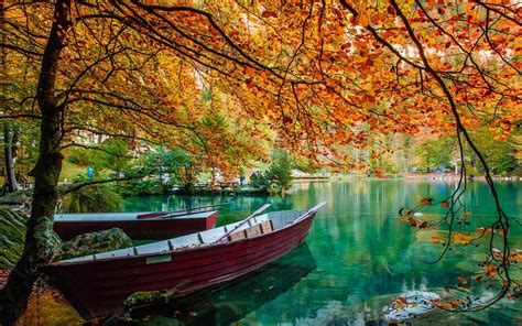 rock the boat green park nature landscape lake trees boat leaves fall green