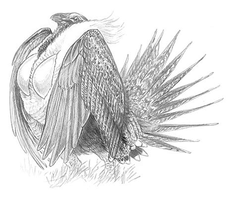 Horseshoe Decorations For Home sage grouse drawing