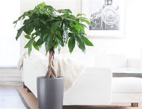 good indoor plants 1000 ideas about good indoor plants on pinterest best