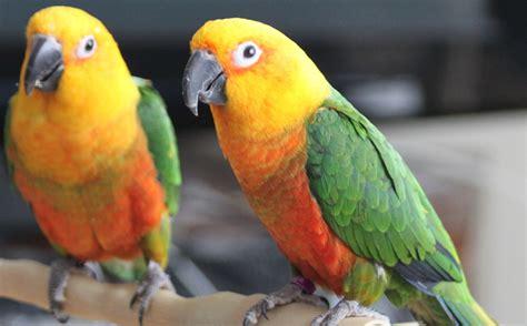 homepage parrotsrok com