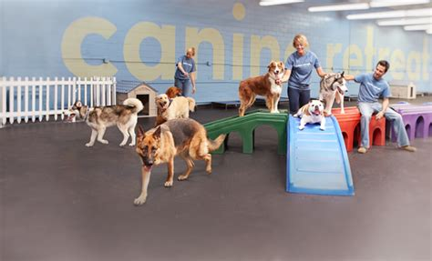 puppy day care daycare canine retreat daycare boarding
