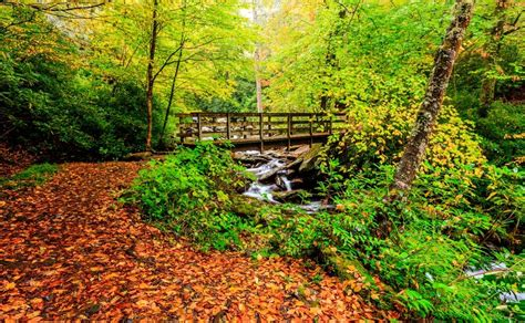 smoky mountain fall colors 6 tips for enjoying the smoky mountains fall colors