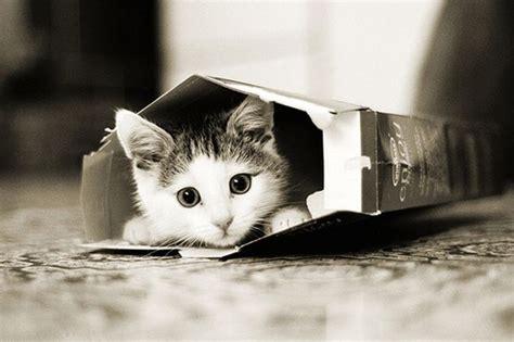imagenes tiernas en blanco y negro 萌猫图 猫咪吧 百度贴吧
