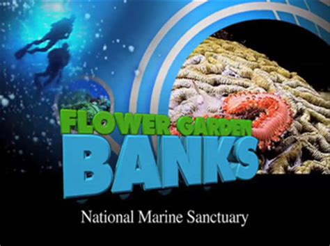Flower Garden Banks National Marine Sanctuary Video Library Flower Gardens National Marine Sanctuary