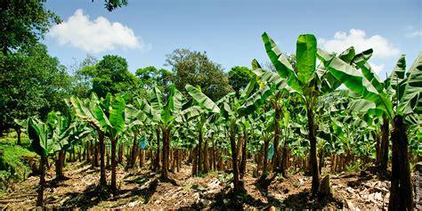 brasilien costa rica auf nach tortuguero teil 1 gwegner de