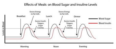 insulin and glucose diagram why low carb meine website