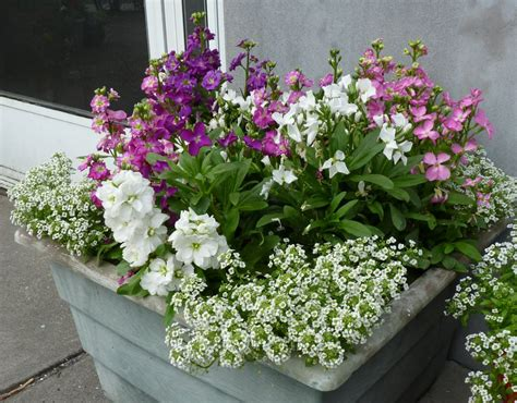 fragrant container plants how to make a small fragrant garden fragrant plants for