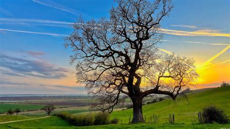 Landscapes Trees Wallpaper 2560x1440 Wallpoper
