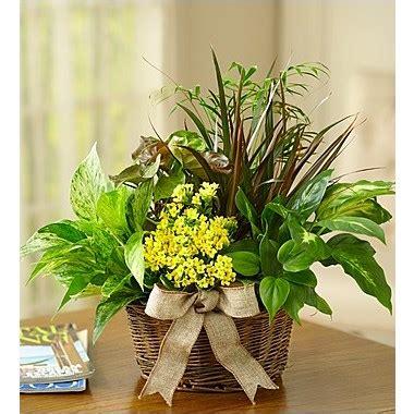flowers european dish garden seattle wa