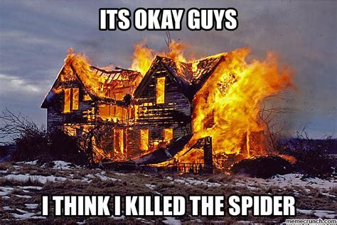 black lady house on fire don t fret not all spiders are the worst preferred pest