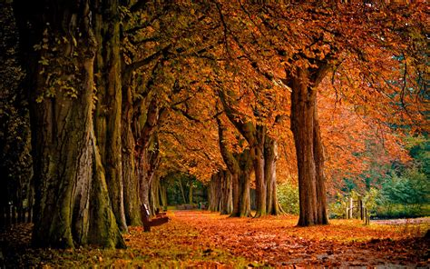 wallpaper for desktop scenery wallpapers autumn scenery desktop wallpapers